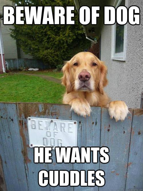 cuddly-dog