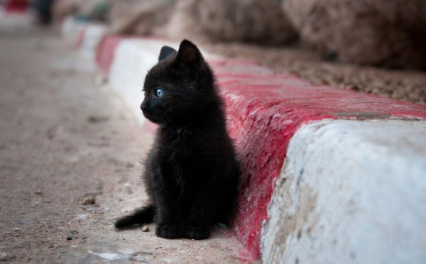 dear-little-kitty-600x372