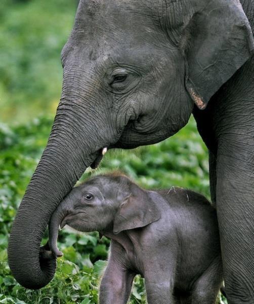 mommy-babby-elephant