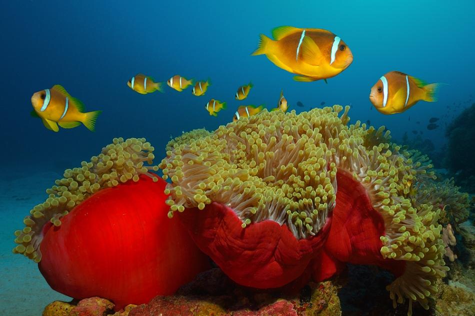Nemo-City-a29925212