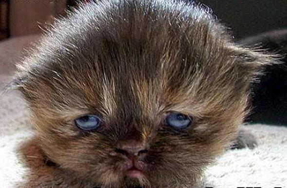 vol-met-katten-froot4-590x388