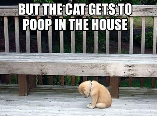 But-the-cat-gets-to-poop-in-the-house