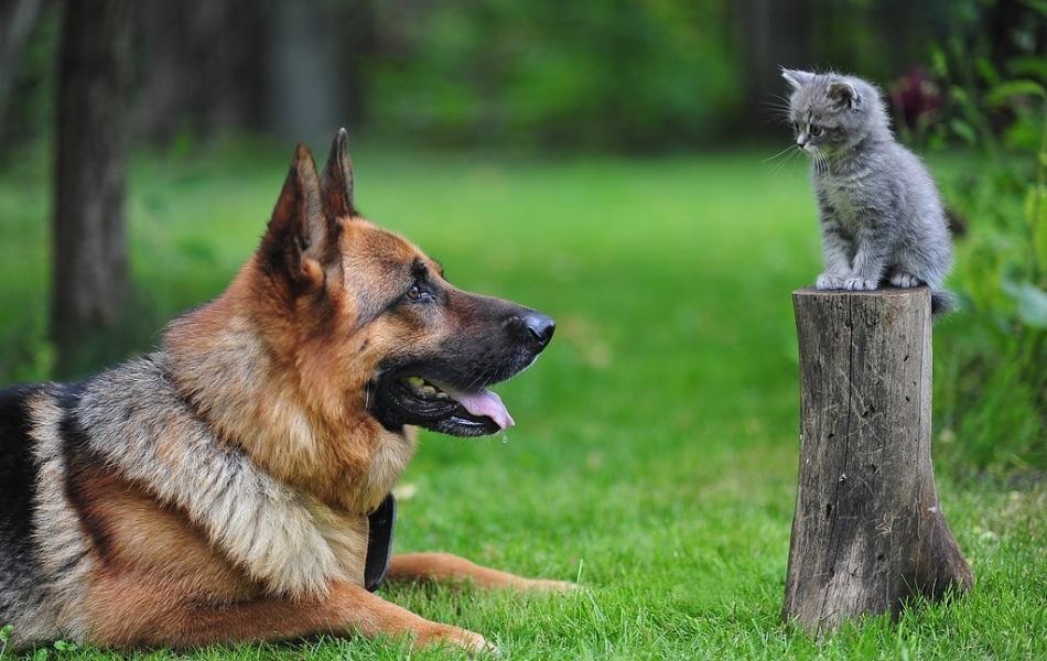 cat-dog-2
