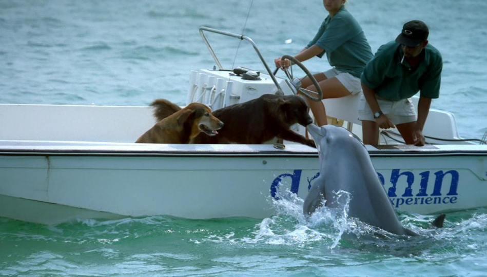 dog_dolphin