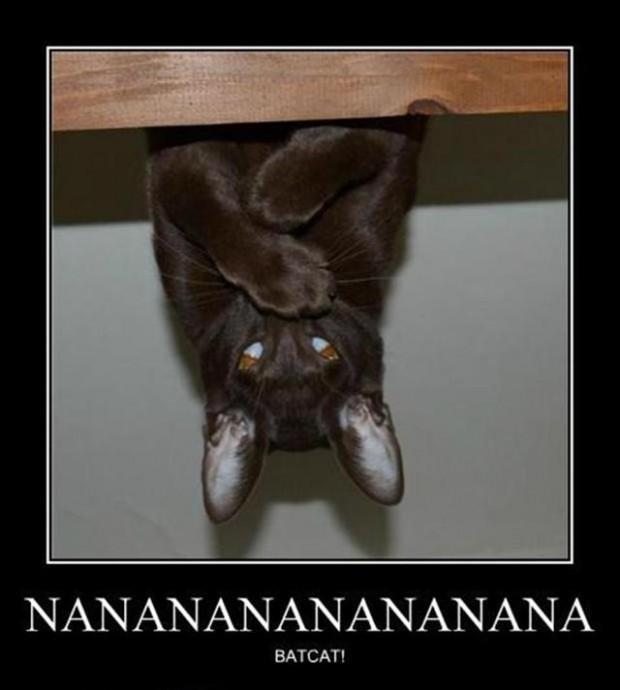 nanana-bat cat