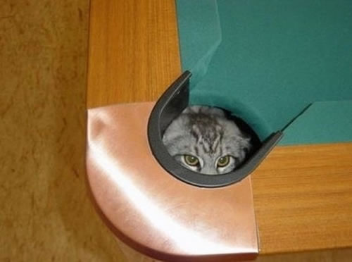 20-Cats-Who-Fail-At-Playing-Hide-And-Seek-15