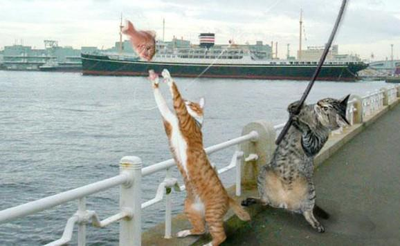 cat-catching-fish