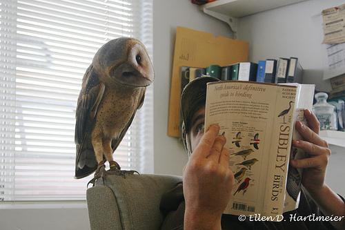 curious-owl