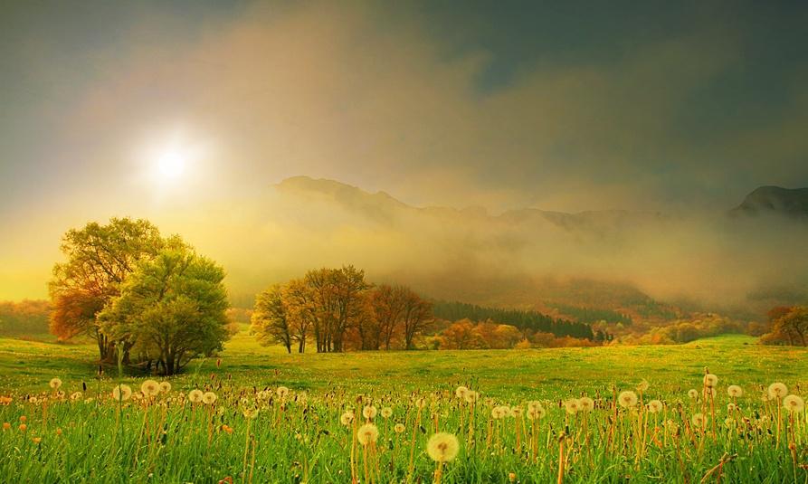 nature-iluminated-sun-36