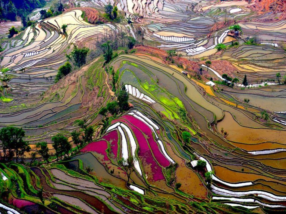 terraced-rice-field-china_21087_990x742