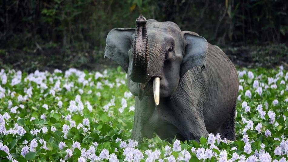 INDIA-ENVIRONMENT-ELEPHANT