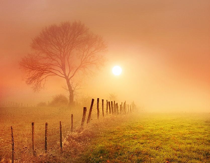 nature-iluminated-sun-23