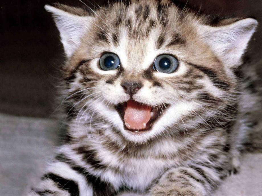 Most-Beautiful-Kitten-Photos4