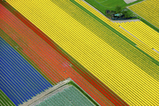 Tulip fields - Lisse, Netherlands