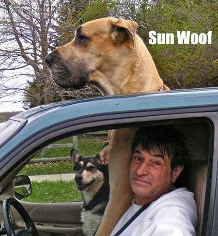 funny-dog-sun-woof